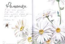My sketchbook / Random pages of my sketchbooks & travel journals