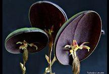 Botanical - photos