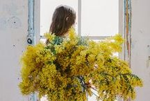 >>Inspiration<< / by Avital Veltz // lili loft