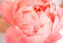 Beautiful Flowers / by Janice Whitaker