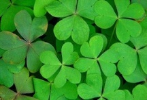 Everything Irish / by Kathy