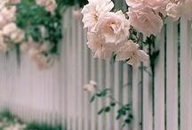 garden. / by Caryn H