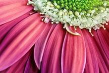 Pretty in Pink... / by Angela Wonnacott