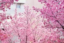 spring . / by Molly Kidd