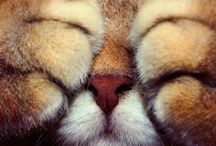 Cats & Dogs / by Sheryl Harmer Landstrom