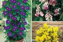 Patios, Plants, Pots & Baskets