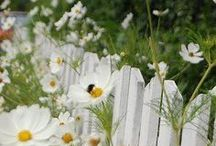 White Picket Fences / Someday I WILL have a white picket fence. / by Jill Nystul  |  One Good Thing by Jillee