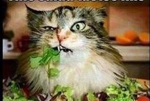 Funnies / Quotes and memes to put a little humor in your day and a smile on your face!