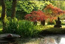Japanese Style Gardens - japanese trees - Buddha Statues in Gardens