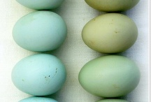 Duck Egg Blue and Green / by Linda de Beyer