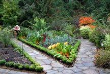 Vegetable Gardens / Vegetable garden, urban farm, urban homestead