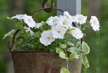 Container Gardening / Gardening in whatever container you can find.