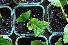 Emergency Prep & Gardening