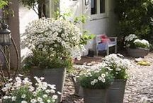 Cottage Gardens and Country Gardens / Cottage gardens, country gardens
