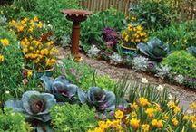 Edible Landscaping / Edible landscaping, edible gardens, edible gardening