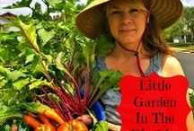 Southern California Gardening / Southern California Gardening | southwest gardening