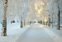 Winter / by Cindy Pokladnik