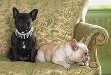 Pets and Animal Art / by Carol Richards