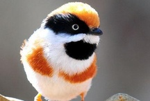 Unusual Birds / by Carol Richards