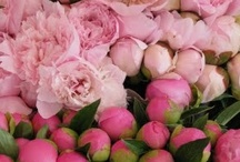 B O T A N I Q U E ♥ Pink Peonies