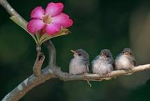 p l u m e s ♥ flocks & feathers