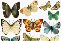 a n i m a l i a ♥ butterflies & dragonflies