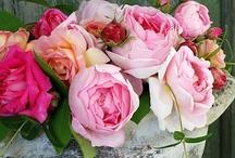 B O T A N I Q U E ♥ Roses, Roses, Roses