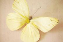 P A L E T T E  ♥  Lemon Chiffon