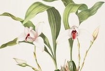 B O T A N I Q U E ♥ Orchids
