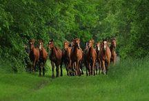 a n i m a l i a ♥ horses