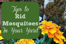 Gardening Tips - How Does Your Garden Grow? / Garden Tips.