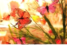 ~Butterflies are Free~ / These are heavenly creations of God to me. My first inspiration of Butterflies began early on with my Mom as I was growing up, a free spirit in her own right, who has always loved and collected Butterflies...they are so beautiful and free!