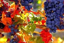 ~From the vine~ / In moderation...it does a body good!