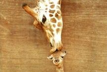 Adorable Animals / by Kristiana