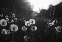 pure gorgeousness / by Alaina Swick