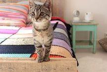 Cute kitties / Kitties, cats, fluff.