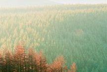 Seasons - Autumn / by Michelle Hanton