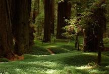 Green Thumb & Nature around home