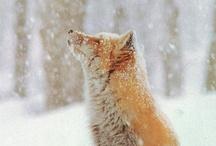 Seasons - Winter / by Michelle Hanton