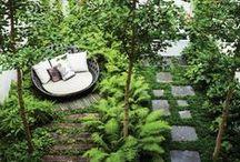 Garden / by Michelle Hanton