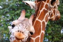 The Cutest Animals Ever! / Cute pictures of animals like giraffes, elephants, zebras...you know just your average zoo!