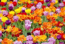 Garden, Yard, Outdoors Stuff! / by Michele Privett-Brown
