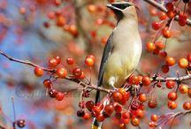Birds / Bird pictures that caught my eye
