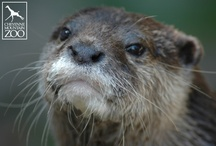 Otterly Cute and Creative