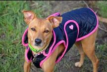 Collars, Harnesses, Leashes, Jackets & Clothes (Dog Gear)