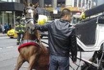 Horse Drawn Cruelty in NYC / by Last Chance for Animals