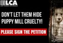SIGN THE PETITIONS / We share LCA petitions here on this board, as well as other petitions we support.  Please sign the petitions and be a voice for the voiceless.  Learn more at lcanimal.org / by Last Chance for Animals