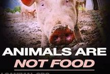 Eating: Without Animal Products (VEGANISM) / by Last Chance for Animals