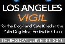 STOP THE YULIN DOG MEAT FESTIVAL / by Last Chance for Animals