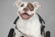 Disabled & Happy / by Last Chance for Animals